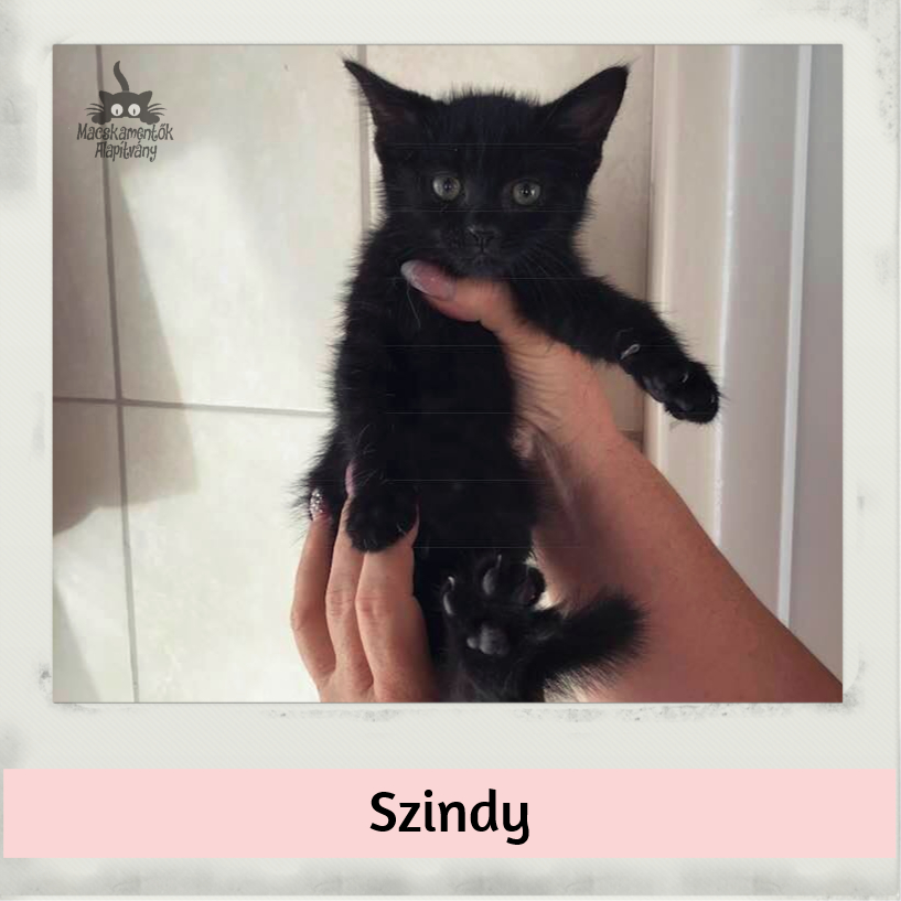 szindy_bf.jpg
