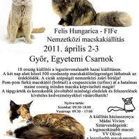 Hatalmas macskashow Győrben