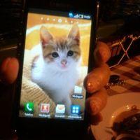 Telefonban van az új cicám