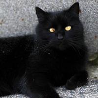 A Ford Solymár macskabarát