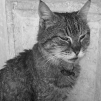 A Velencét megmentő macskák