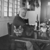 Az öreg Hemingway és a macskák