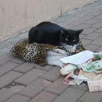 Kolduló macska