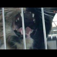 Szerető gazdát kapott az utolsó árva kolontári cica