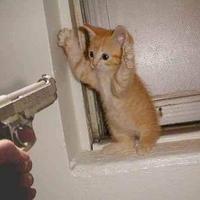 Macskára, légfegyverrel