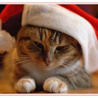 Boldog karácsonyt az éhezőknek is
