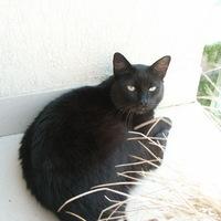 Félfarkú macska gazdit keres