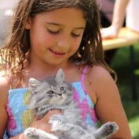 Rubint Réka szépségdíjas cicája