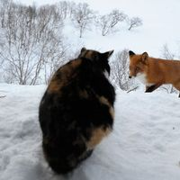 A rókavadász macska