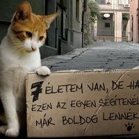 Pályázat a macskák jobb életéért