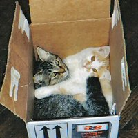 A fagyott macska esete