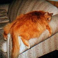 Elhízott macska = felelőtlen gazdi