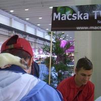 Macska TV stand a Hungexpo-n
