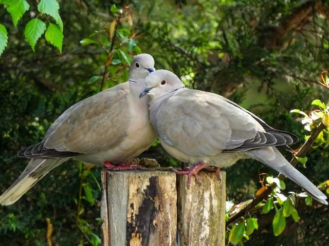 Kerti madármegfigyelések