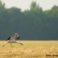 Megjöttek az égi vándorok!  Te láttál már az idén gólyát?