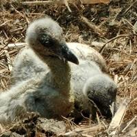 A gólya hozza a kisbabát:)
