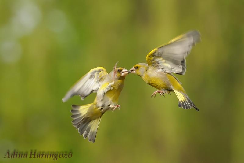 DSC_9945-bird2.jpg