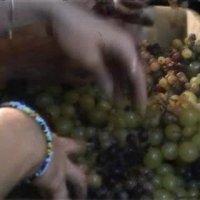 Így készülnek a Mariatchi borok?