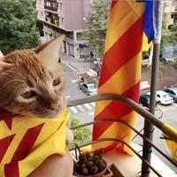 Még a macska is nemzeti színekbe burkolózott