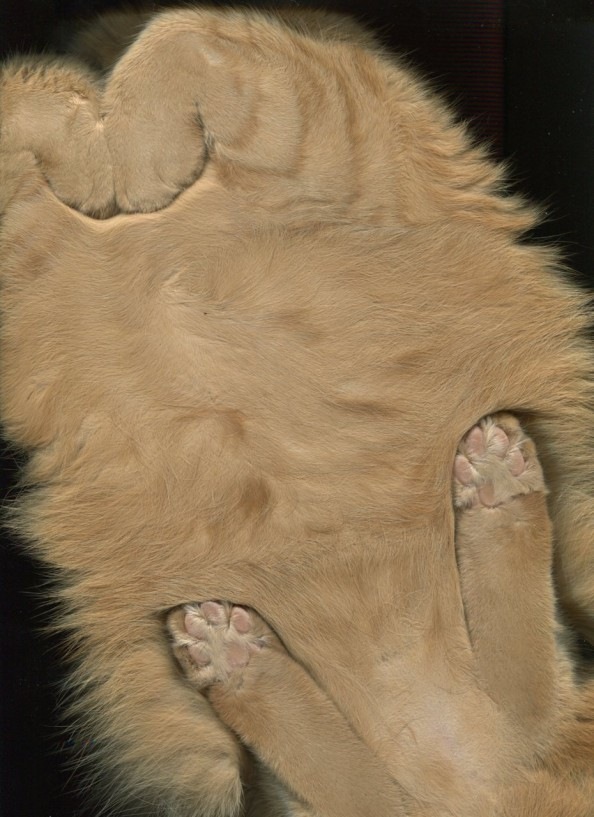 cat_scan_cute3-594x817.jpg
