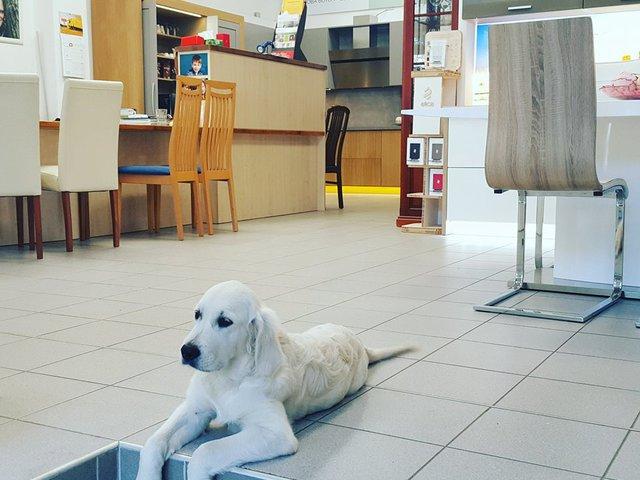 Az év kutyabarát boltja 2017