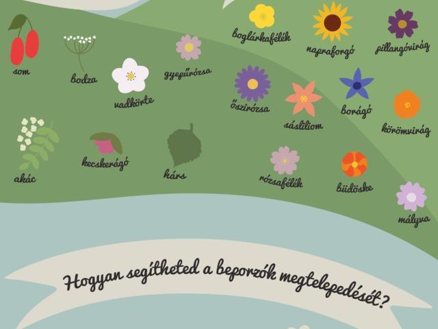 10 tipp a beporzóbarát kert kialakítására