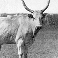 Szekiz-Munduz II.