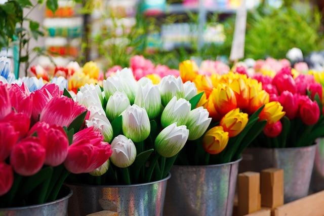 flower-69490_640.jpg