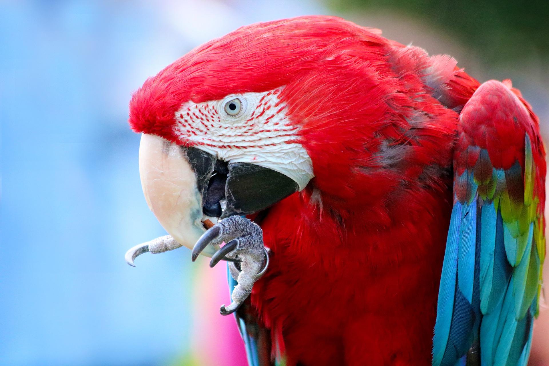 parrot-5411705_1920.jpg