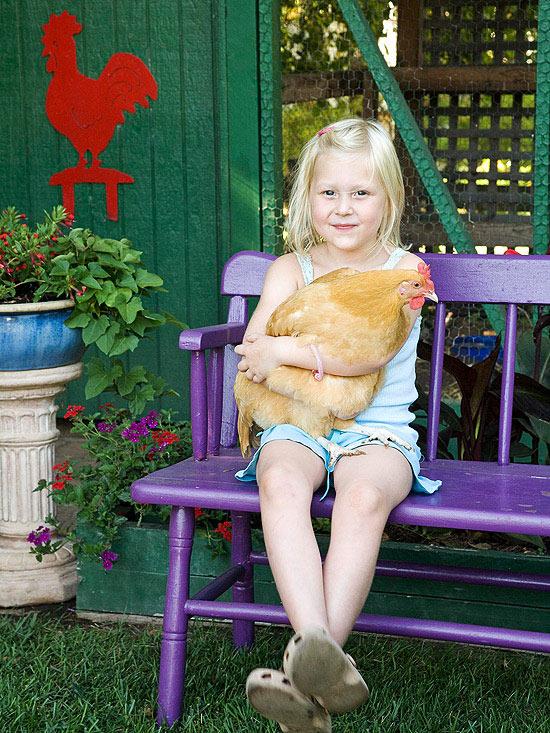 csirkeket.jpg