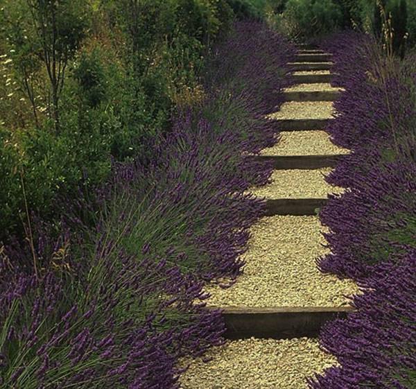 paths.jpg