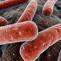 Halálos baktérium szabadult ki egy amerikai laboratóriumból