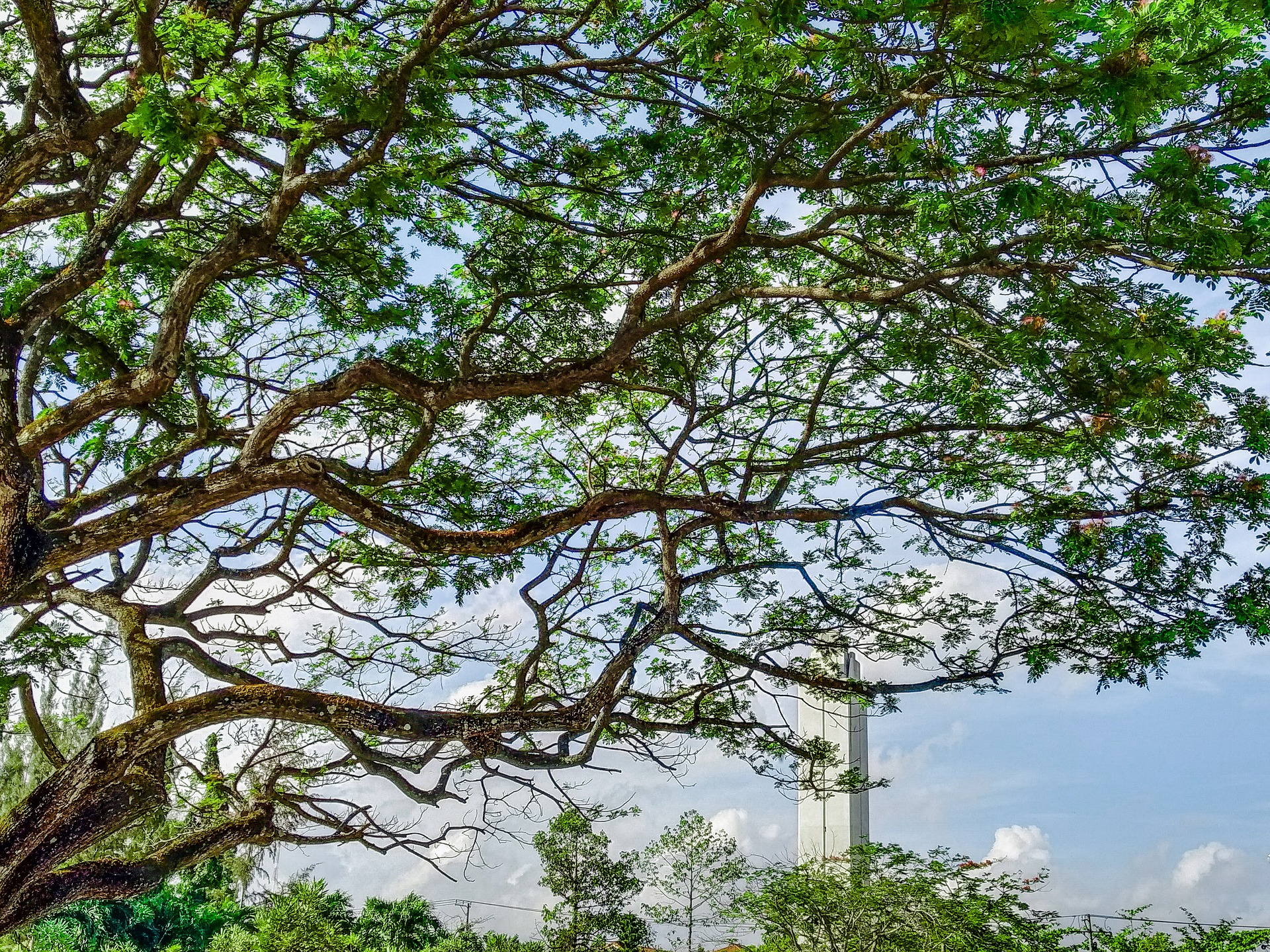 tree-5040452_1920.jpg