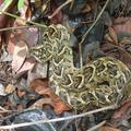 Kígyók és skorpiók