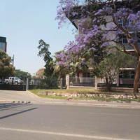 Tavaszi zsongás Zambiában