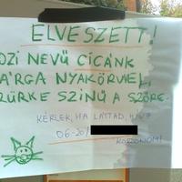 Budapesti anzix – Rozi cica elveszett