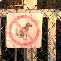 Budapesti anzix – Ne szarasd a kutyádat ide!