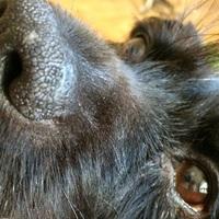 Itt a segítség a kutya krónikus hasmenésére!