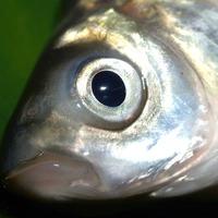 A te mosógépedben is haldoklott egy hal?