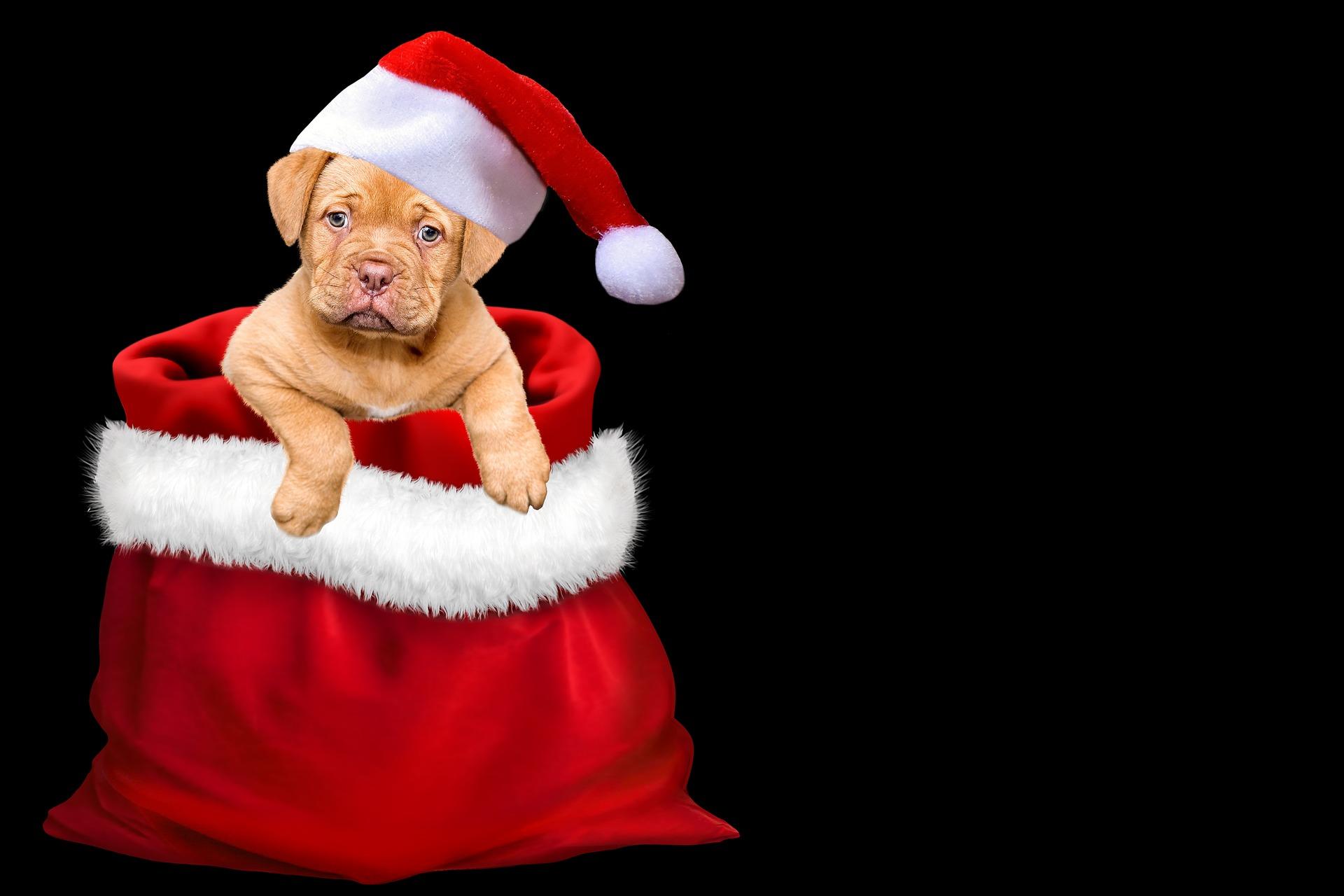 christmas-3001320_1920.jpg