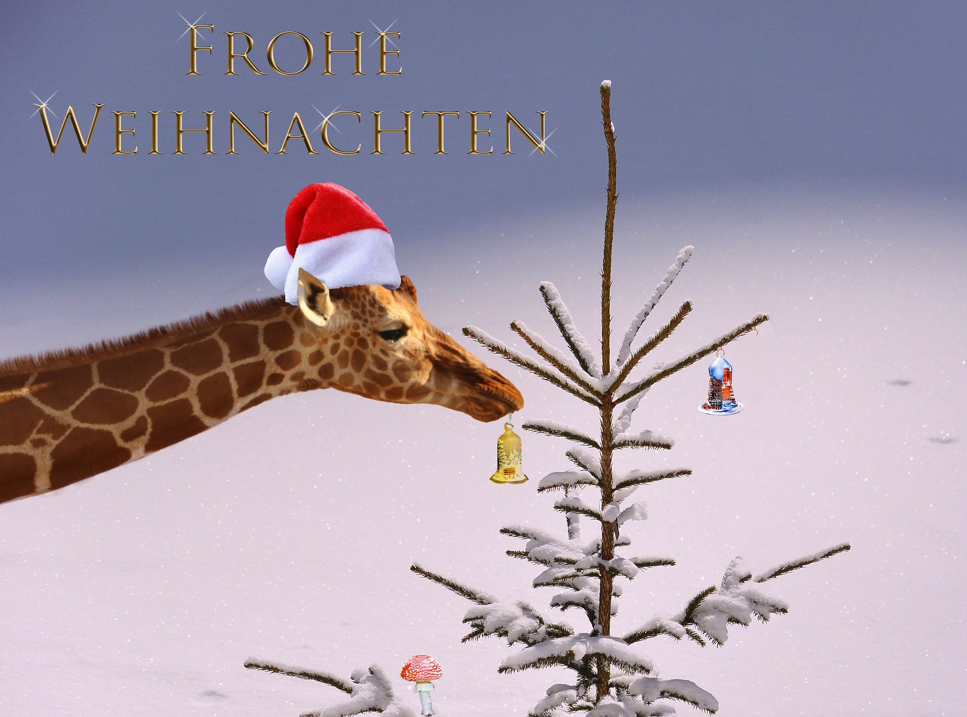 christmas-card-2923260_1920.jpg