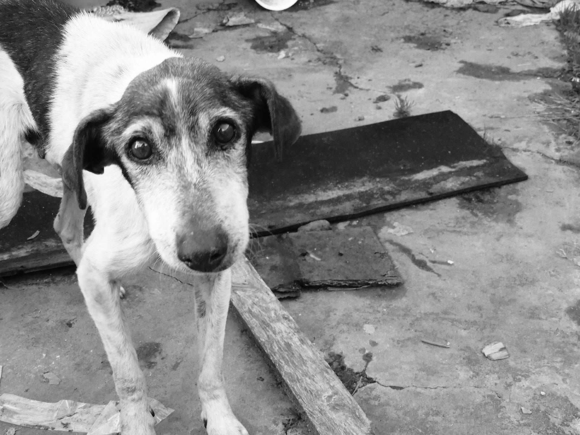 dog-1533715_1920.jpg