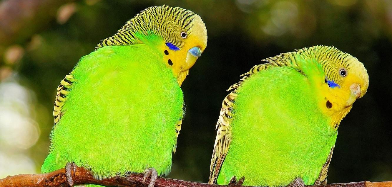 papagaj.jpg