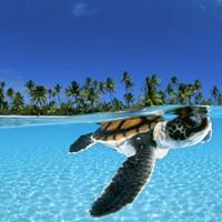 David Doubilet lenyűgöző képei a víz alatti világról
