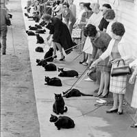 Ralph Crane: Black Cat Auditions (1961)