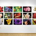 Válogatás Nobuyoshi Araki: Érzelmes utazás című kiállításának képeiből
