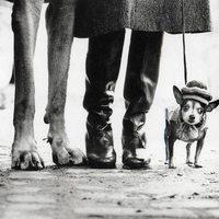 Elliott Erwitt - Kutyák (6 fotó)