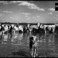 Magyarország világhírű fotográfusok lencséjén keresztül 1. rész (1947-1956)