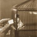 Válogatás az avantgárd fényképezés mesterműveiből