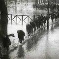 Párizs szörnyű napjaiból - Ady Endre írása és francia fotográfusok képei az 1910-es árvízről